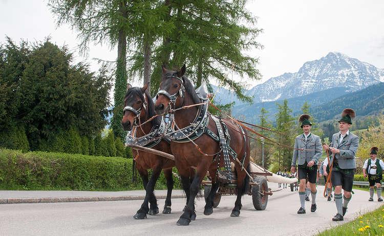 Anlieferung des Maibaums mit einem Pferdegespann
